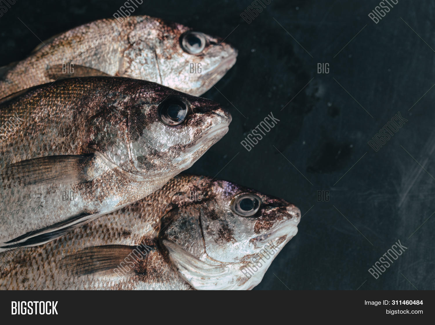 Fresh Fish In Market On Dark Background