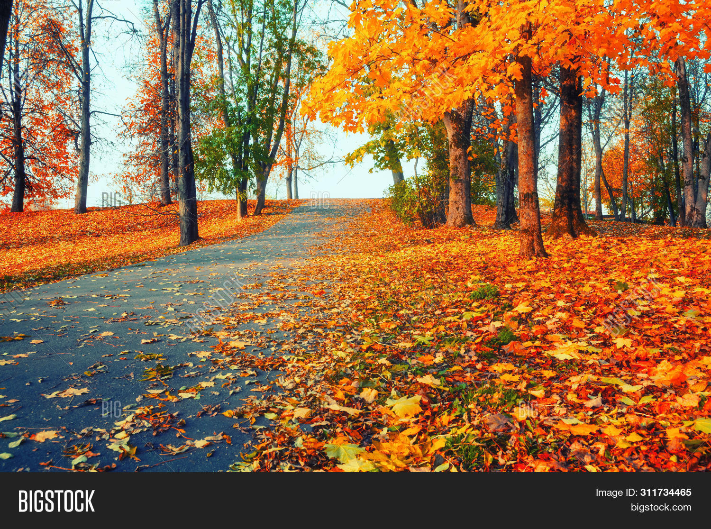 November,October,September,autumn-alley,autumn,autumn-beautiful,bright,autumn-city,autumn-day,dry,autumn-evening,fall,fallen,autumn-foliage,footpath,autumn-foreground,autumn-forest,gold,autumn-grove,autumn-landscape,autumn-leaves,autumn-morning,autumn-nature,autumn-panorama,autumn-park,autumn-path,quiet,red,autumn-road,row,russian,autumn-scene,autumn-season,stunning,autumn-sun,sunny,autumn-sunrise,sunset,autumn-sunset,autumn-tree,view,autumn-wallpaper,autumn-weather,yellow,yellowed