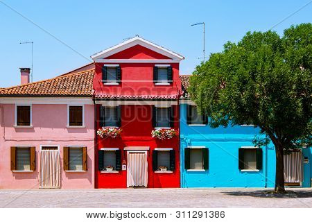 Beautifully landscaped yard in Burano, Italy. Yard with colorful houses, red, pink, blue and heart-shaped tree. Cute colored houses with flowers on the windowsills. stock photo
