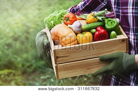 Farmer holds in his hands a wooden box with a vegetables produce on the background of the garden. Fresh and organic food. stock photo