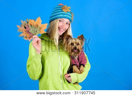 Take Care Pet Autumn. Veterinary Medicine Concept. Health Care For Dog Pet. Pet Health Tips For Autu