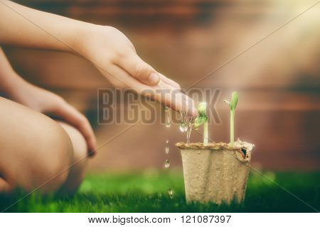 Little child cares for plants. Child watering a sprout. Spring concept, nature and care.