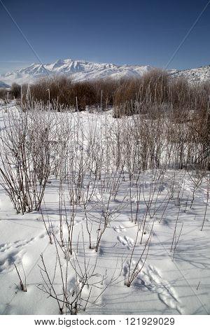 Beautiful vertical mountain snowscape Utah Rocky Mountains stock photo