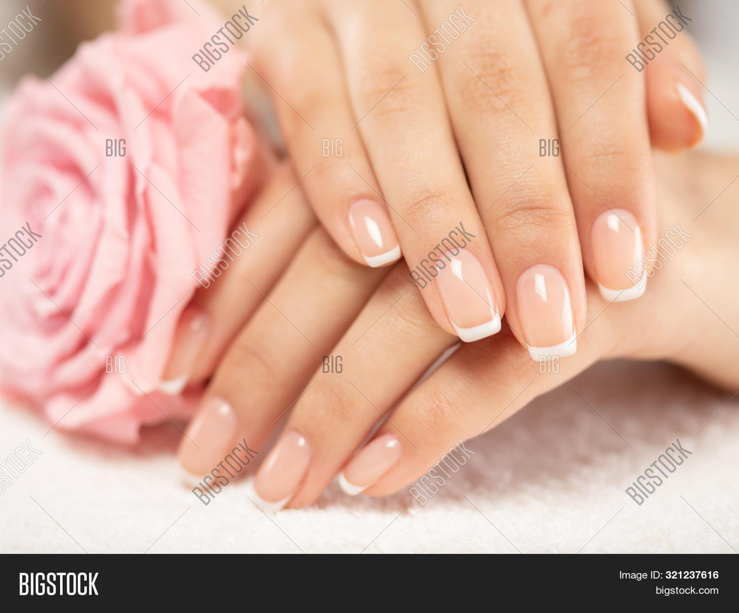 Beautiful woman's nails with french manicure and rose. Beautiful female hands. Hand care. Woman care