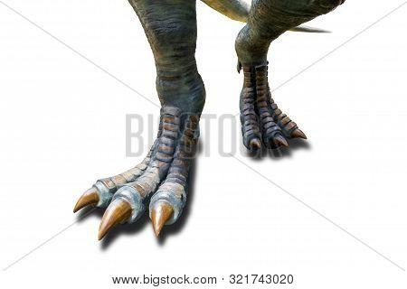 Tyrannosaurus ( T-rex ), Dinosaur feet walking of Tyrannosaurus ( T-rex ) on a white background. stock photo