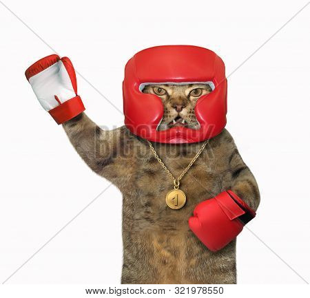 The cat boxer in a boxing red helmet and gloves raised paw. White background. Isolated. stock photo