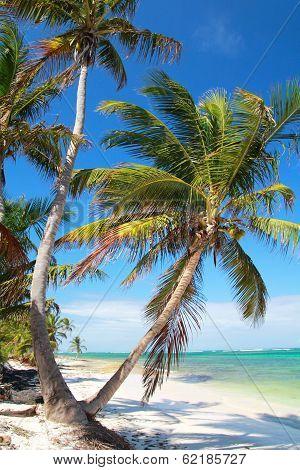 Palms on tropical beach coastline