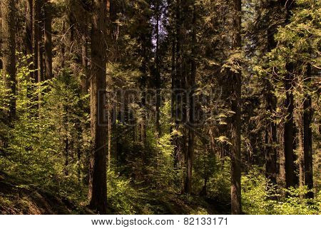 Sunlight beams through trees in a green forest stock photo