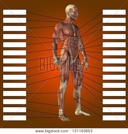 3D illustration of a concept or conceptual 3D male or human anatomy, a man with muscles and textbox on red gradient background  stock photo
