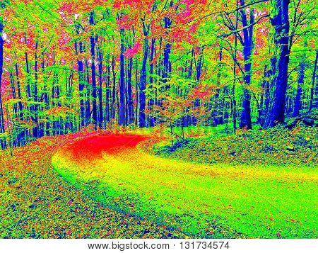 Autumn forest. Slippery way in infrared amazing thermography photo. Scan of thermovision. stock photo