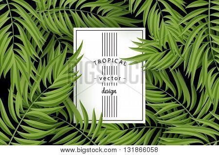 Tropical Palm leaves. Tropic palm. Tropical Palm leaf. Green tropic palm. Green palm summer tropical leaves. Tropic leaves frame. Green summer tropic palm leaves. Square frame.