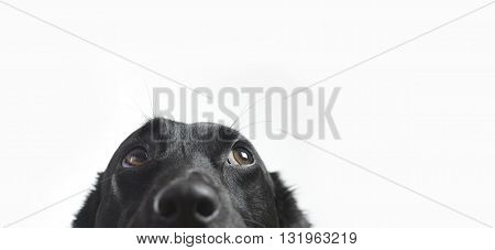 Cute dog looking up isolated on white