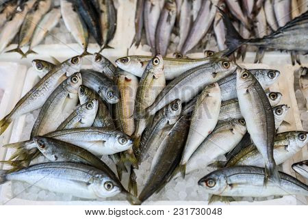 Freshly caught bogue or Boops boops, gopa fishes in the box on the counter at the greek fish market. Horizontal. stock photo