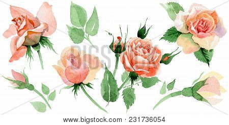 Wildflower rose flower in a watercolor style isolated. Full name of the plant: rore, rosa, hulthemia. Aquarelle wild flower for background, texture, wrapper pattern, frame or border. stock photo