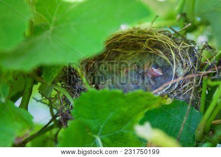 Nestlings sleeping in the nest. Baby birds in nest stock photo