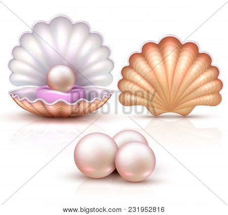 Opened and closed seashells with pearls isolated. Shellfish vector illustration for beauty and luxury concept. Shell and pearl, seashell luxury treasure stock photo