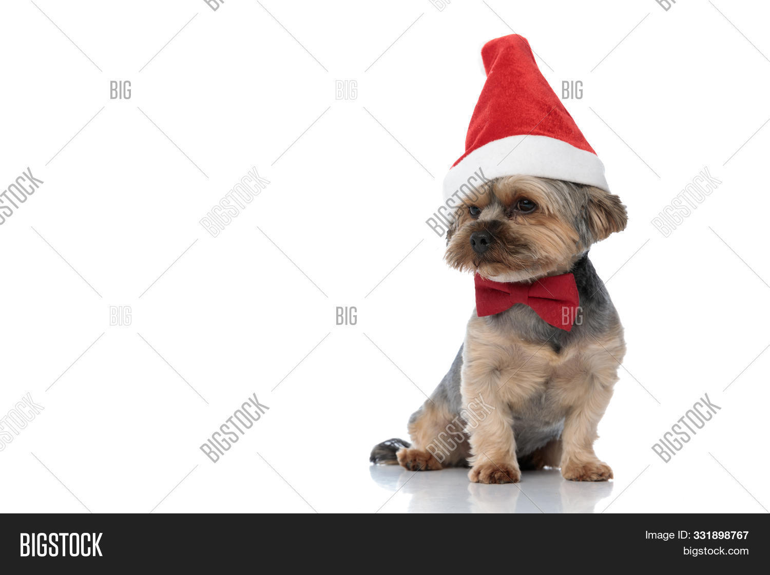 adorable,animal,away,background,bow,bow tie,bowtie,breed,brown,canine,cap,christmas,costume,cute,dog,domestic,dreaming,fur,happy,hat,holiday,isolated,little,looking,merry,neck,pensive,pet,puppy,red,santa,santa claus,seated,side,sitting,small,studio,terrier,thinking,thoughtful,tie,wearing,white,wonderful,wondering,yorkie,yorkshire,yorkshire terrier