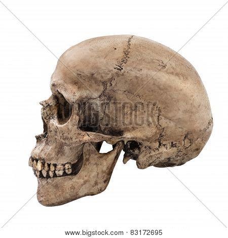 Human skull on isolated white background side view stock photo