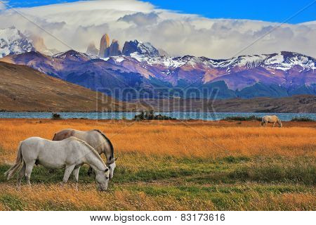 Lake Laguna Azul in the mountains. On the shore of Lake grazing horses. Impressive landscape in the national park Torres del Paine, Chile stock photo