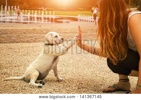handshake between woman and dog - High Five - teamwork between girl dog