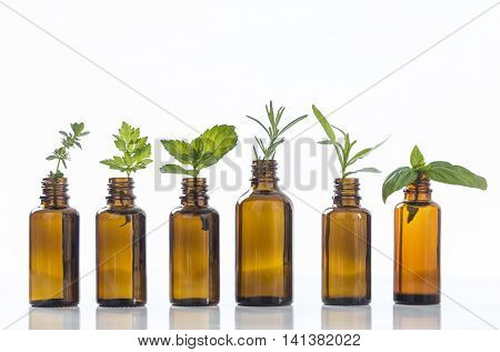 essential oil bottle with herbs basil flower, basil flower, rosemary, oregano, sage, parsley , thyme and mint