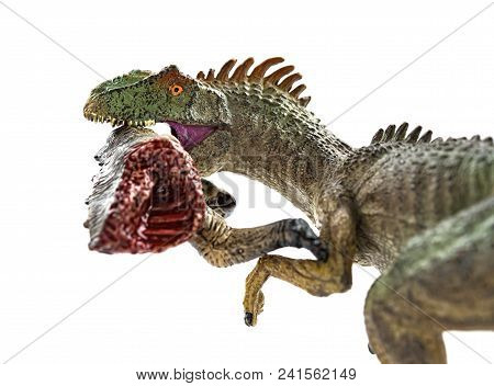 allosaurus  biting a dinosaur body with blood on white close up stock photo
