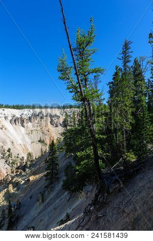 A single tree growing on the slopes of the banks of the Yellowstone river. Image from the grand canyon of Yellowstone. Yellowstone National Park, WY, USA, stock photo