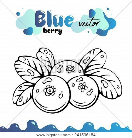 Blueberry vector illustration, berries images. Isolated blueberry vector illustration for menu, package design. Sketch blueberry berries images. Isolated blueberry vector illustration, berries images. stock photo