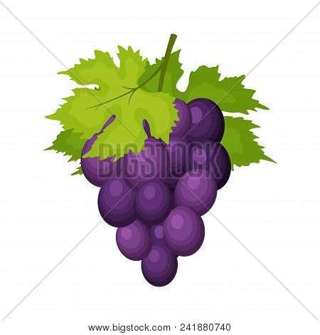 Bunch of wine grapes with leaves isolated on white backgrond. Grape icon in flat cartoon style. Fresh berry, raw materials fruit. Vector illustration stock photo