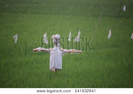 Scarecrow: A scarecrow is a decoy or mannequin, often in the shape of a human. Humanoid scarecrows are usually dressed in old clothes and placed in open fields to discourage birds from disturbing and feeding on recently cast seed and growing crops. stock photo