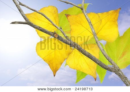 Tree with yellow and green leaves in fall. stock photo