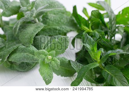 Green herbal mix of fresh mint and melissa herbs in stainless metal strainer bowl on white wooden background stock photo