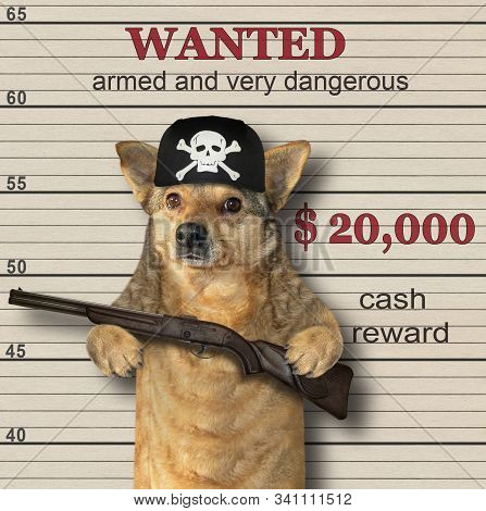 The beige dog gangster in a black bandana holds a fifle. He is wanted. Lineup background. stock photo
