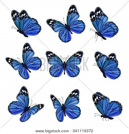 Colored butterflies. Flying beautiful insects wedding butterfly with decorated wings vector. Illustration insect butterfly spring, pattern realistic wings in blue colored stock photo