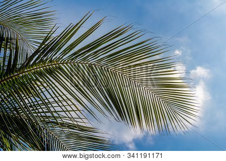 Beautiful big Cocos nucifera palm leaves are on the blue sky with white clouds background stock photo