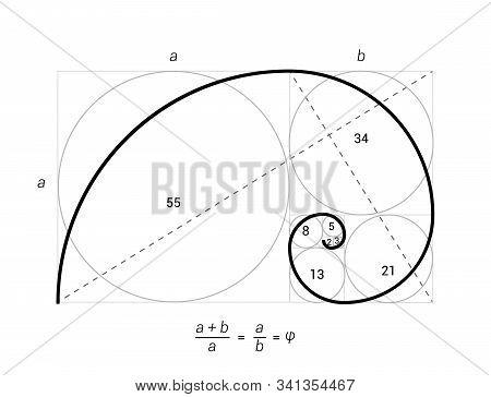 Golden ratio vector proportion spiral section. Fibonacci golden ratio geometry stock photo