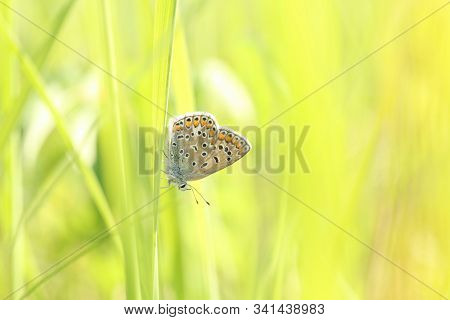Blue Butterfly spring morning  Nature background Butterfly green grass meadow Nature background Macro Close-up Nature background summer Nature background sun sunshine Nature background Natural environment Nature background Butterflies Nature background. stock photo