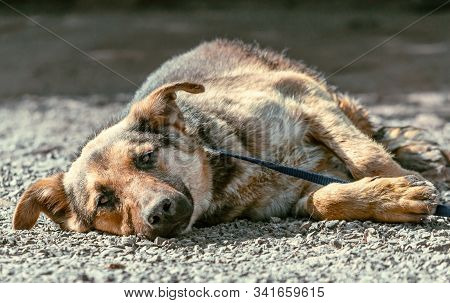 Outbred dog sadly lies on the stones of gravel stock photo