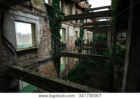 Inside ruined building overgrown by plants. Nature and abandoned architecture, green post-apocalyptic concept stock photo