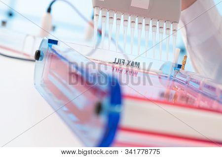 Loading Samples and Running an Agarose Gel for electrophoresis, Gel electrophoresis is the standard lab procedure for separating DNA stock photo