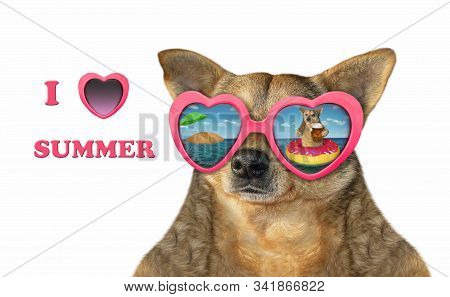 The beige dog wears heart shaped sunglasses with the reflection of another dog drinking beer on a rubber ring on the sea. I love summer. White background. Isolated. stock photo