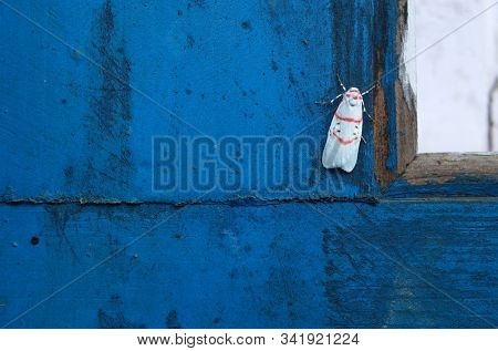 Small moth on blue painted wooden surface. Photographed in Nepal stock photo
