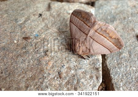 Big brown moth on stone surface. Photographed in Nepal stock photo