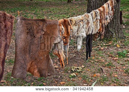 row of wild animal skins hanging from a rope - craft tanned leather of an ancient tannery stock photo