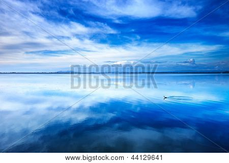 Sunset blue landscape. Little grebe diving bird in a lagoon with reflection. Orbetello lagoon with reflection Argentario Tuscany Italy. stock photo
