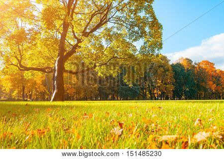 Autumn picturesque landscape in sunny autumn landscape park lit by sunlight -autumn park in sunshine. Sunny autumn landscape of autumn park with golden trees. Autumn park landscape in soft sunny light