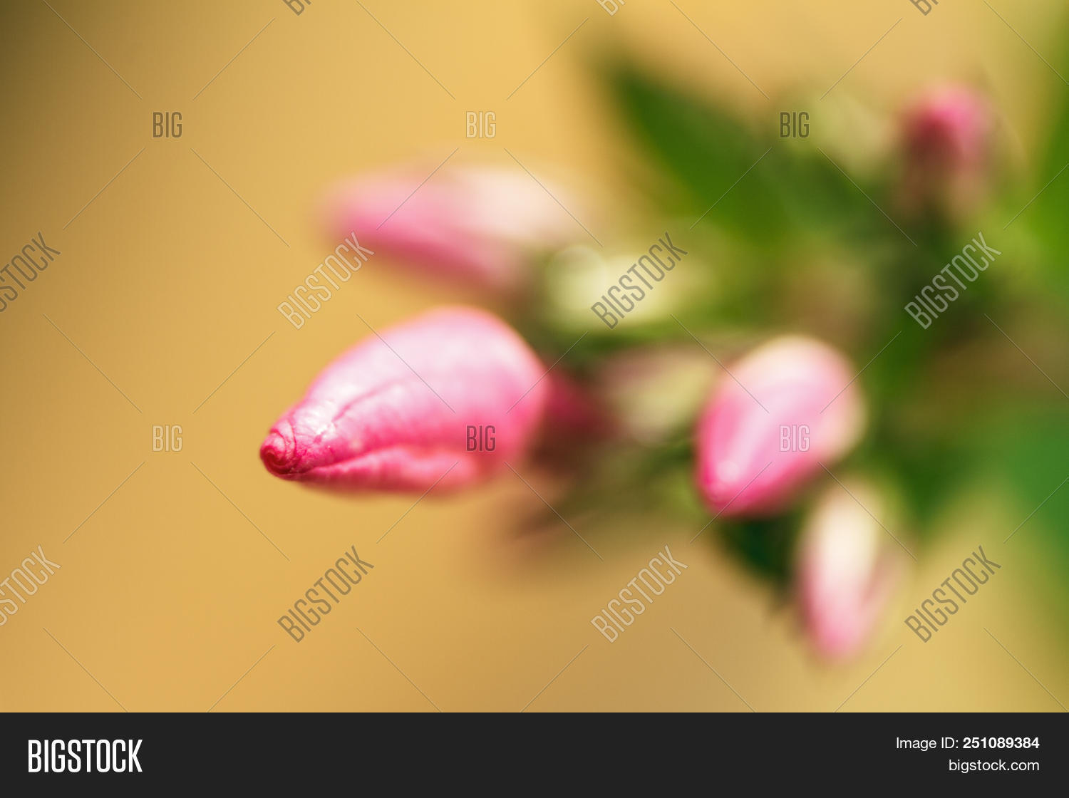 Fresh bud of beautiful flower in macro. Abctract background for design. Copy space.
