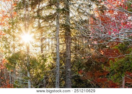 Autumn Foliage in a Forest on a Sunny Day in Acadia National Park, Maine stock photo