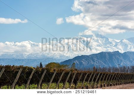 Early morning in the late autumn: Volcano Aconcagua Cordillera and Vineyard. Andes mountain range, in the Argentine province of Mendoza stock photo