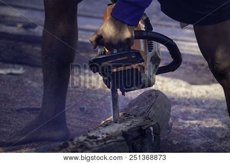 Man uses gasoline engine portable chainsaw cut timber into pieces. Some parts of the man body without any personel protection equipment (PPE) in the picture. stock photo